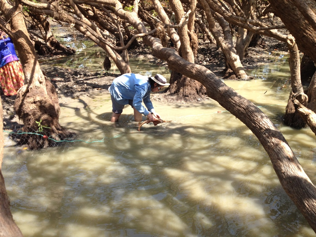 CDU's Peter Kyne rescues juvenile largetooth sawfish from a waterhole near the Daly River.  Image CDU