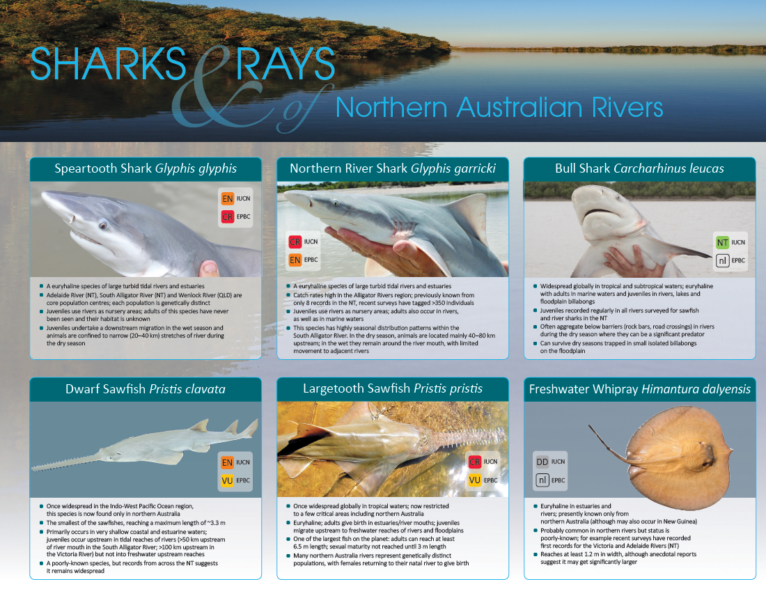 Sharks and Rays of Northern Australia Rivers