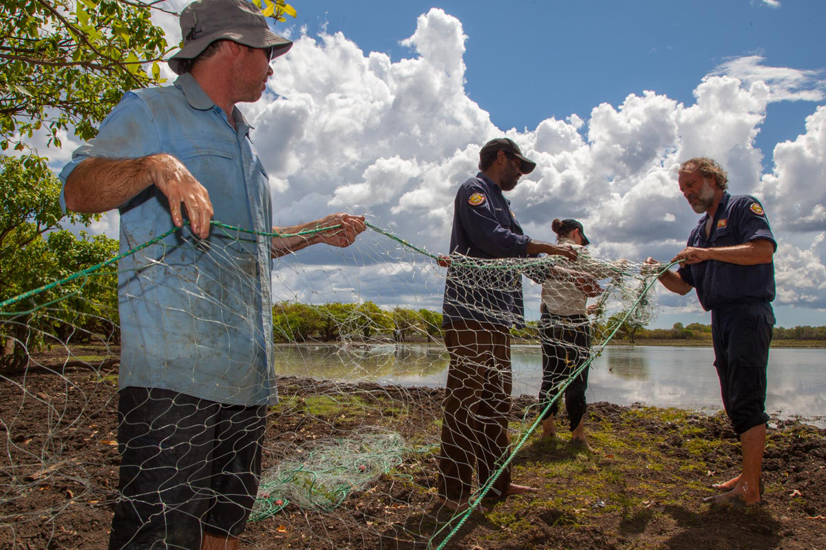 Gill netting for Largetooth Sawfish