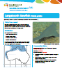 Largetooth Sawfish Pristis pristis species information sheet