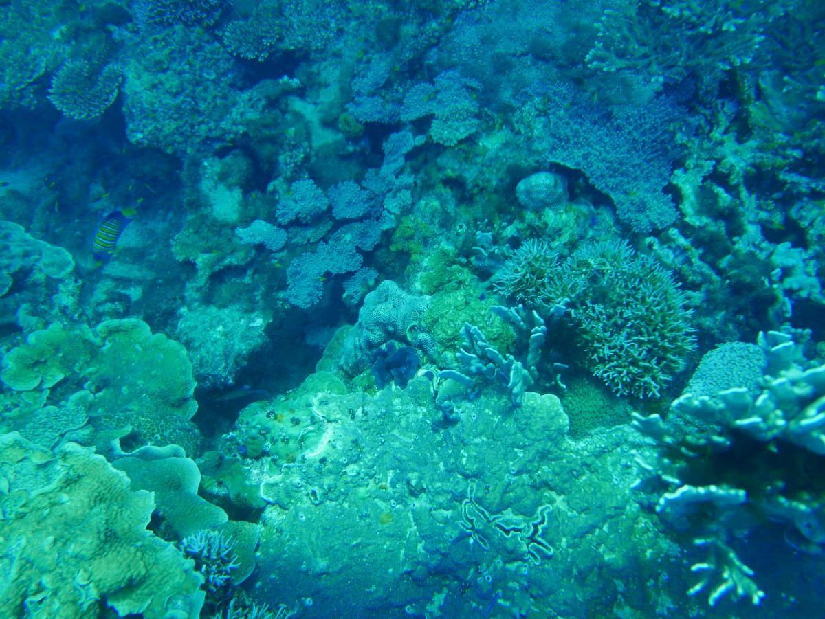 Detail of corals on the seafloor in Arafura Marine Park