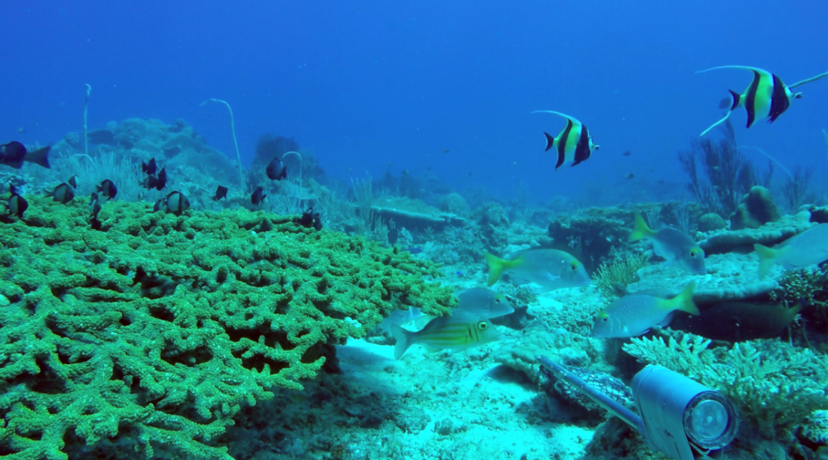 Corals and fish in Arafura Marine Park