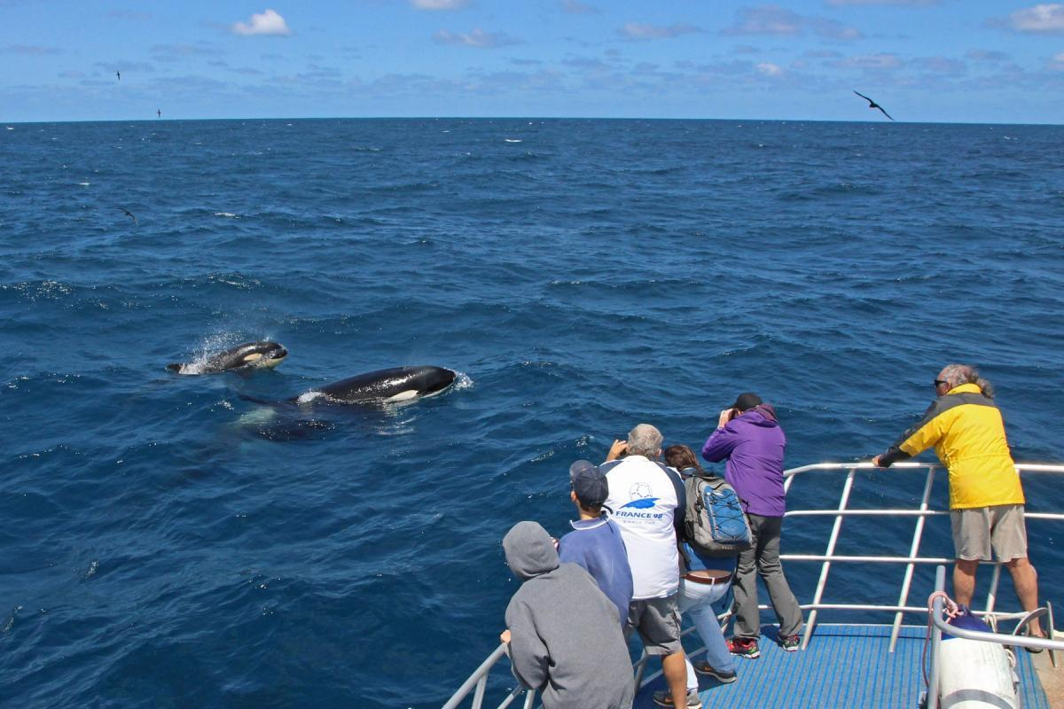 Passengers observing killer whales at Bremer Canyon. Credit Keith Lightbody
