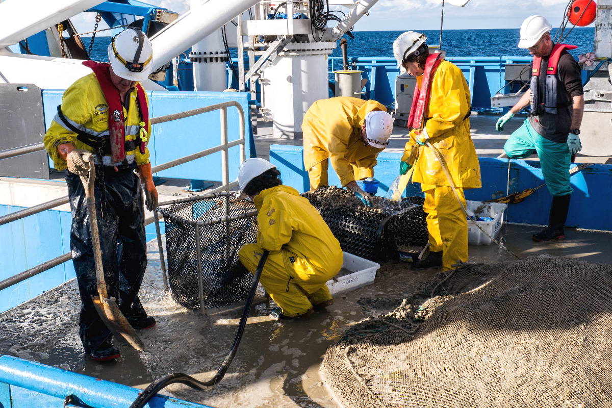 Hosing a mud-filled beam trawl