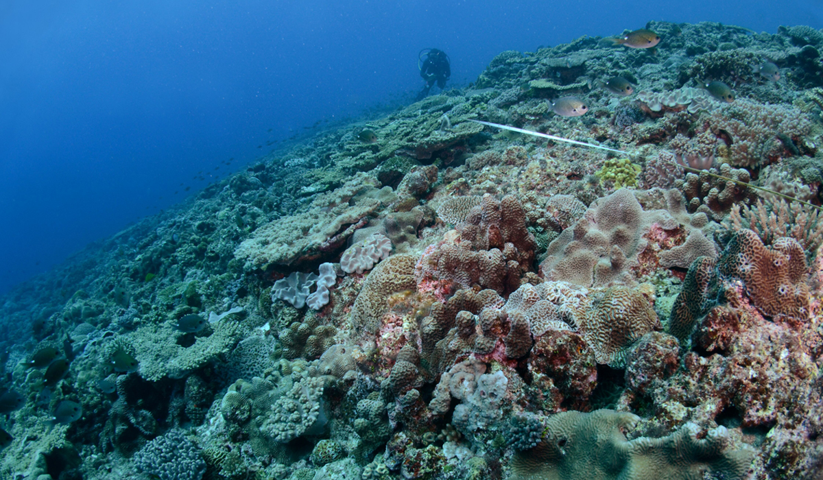Spectacular reef communities at Elizabeth Reef