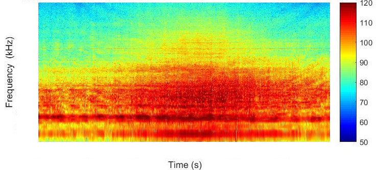 Spectrogram of the noise from a ship. Image Integrated Marine Observing System
