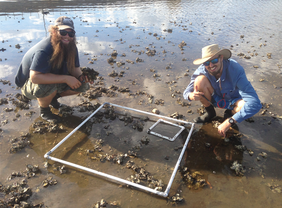 Researchers survey remnant oyster reef in the Rchmond River mudflat