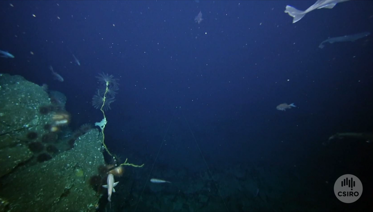 Craggy seamount edge with fish