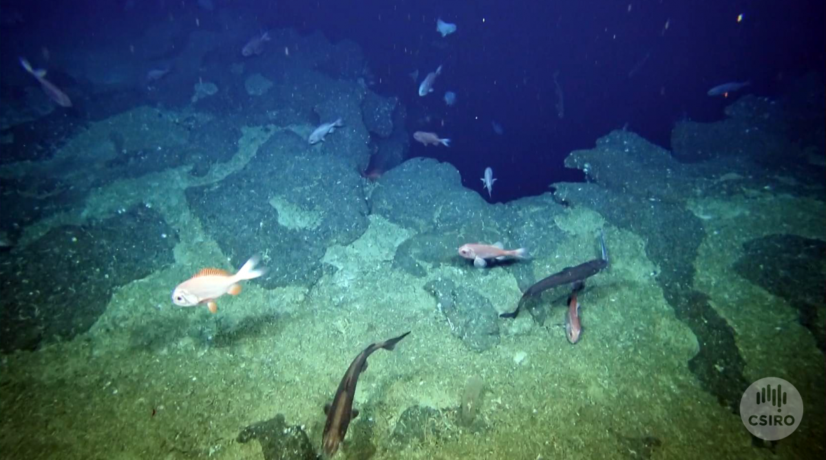 Rocky seafloor with orange roughy