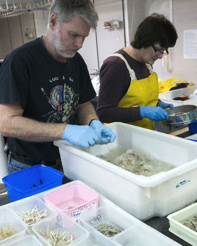 Merrick Ekins and Caroline Farrely sorting specimens
