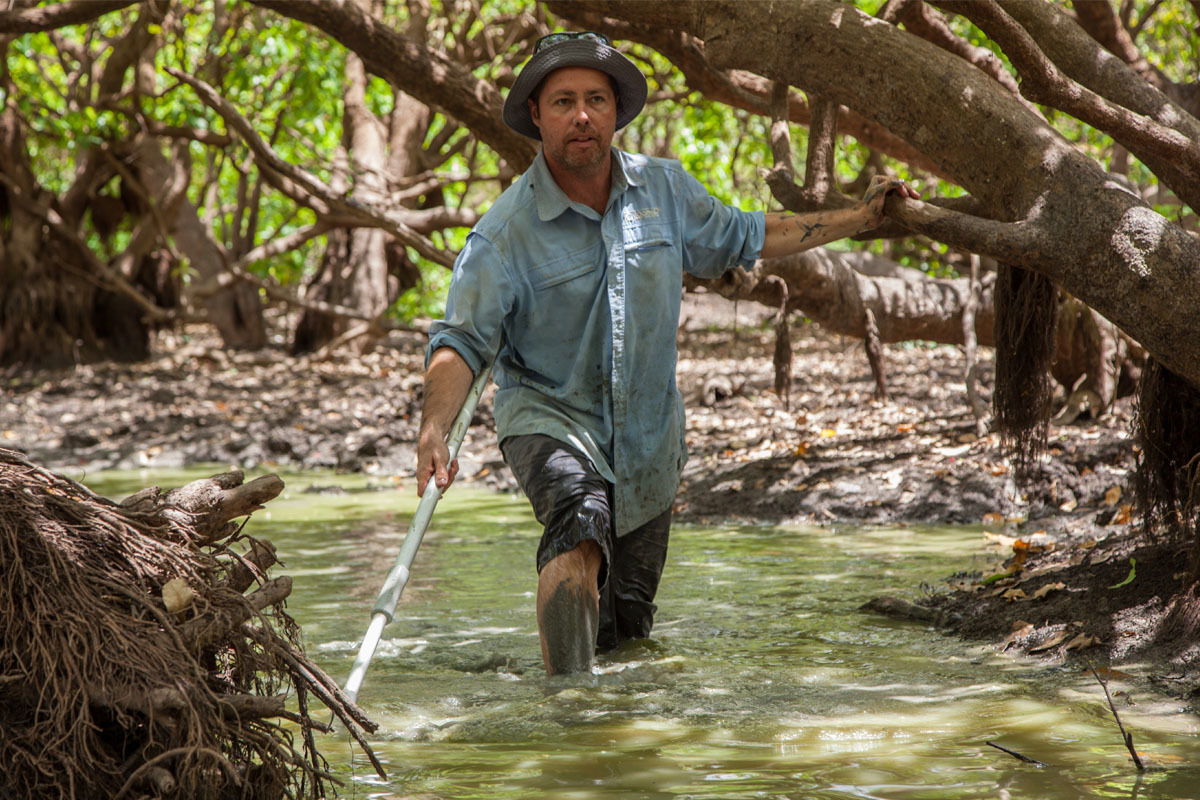Scientist Peter Kyne searches for sawfish in a waterhole.