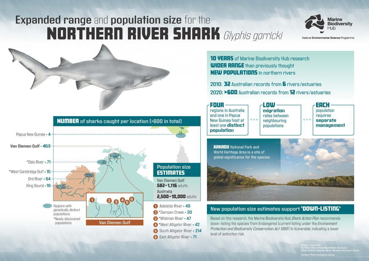 A poster summarising Northern River Shark research findings