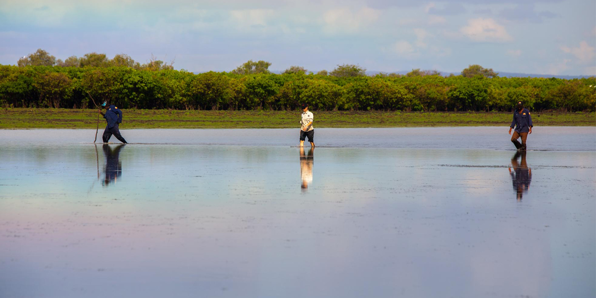 Indigenous rangers and a marine scientist search for sawfish on the Daly River floodplain
