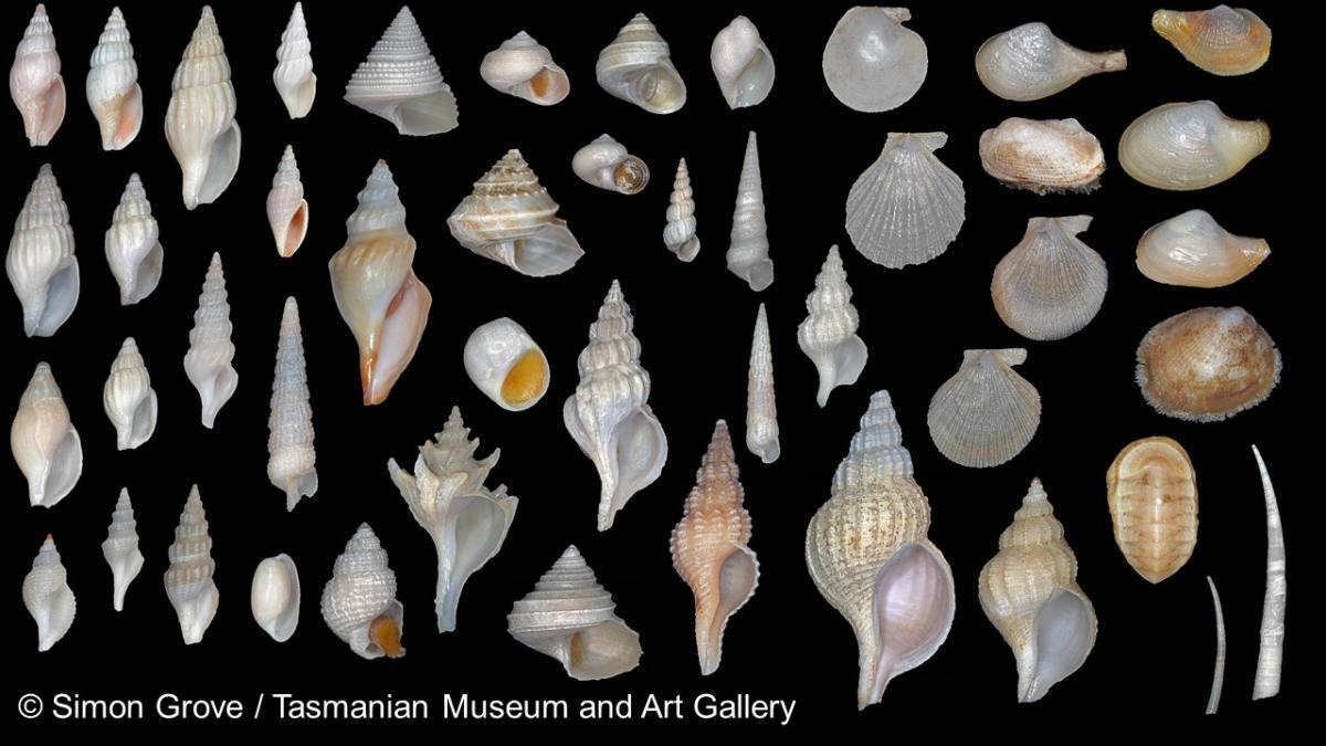 montage of  shells