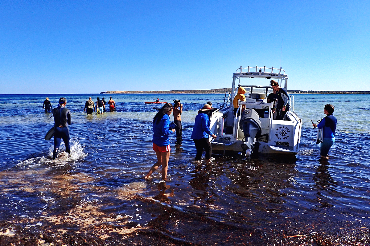 Researchers and Traditional Owners explore seagrass in Fowlers Camp, Shark Bay.