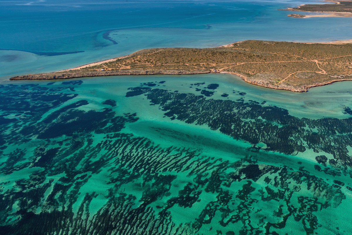 Aerial view of seagrass meadows in the waters of Shark Bay.