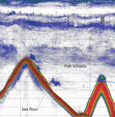 echogram showing deep seafloor and fish