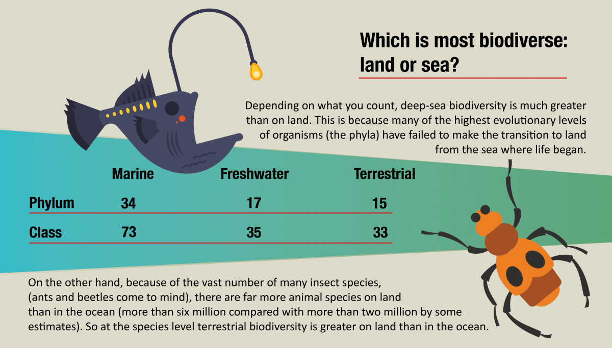 A diagram comparing marine and terrestrial biodiversity