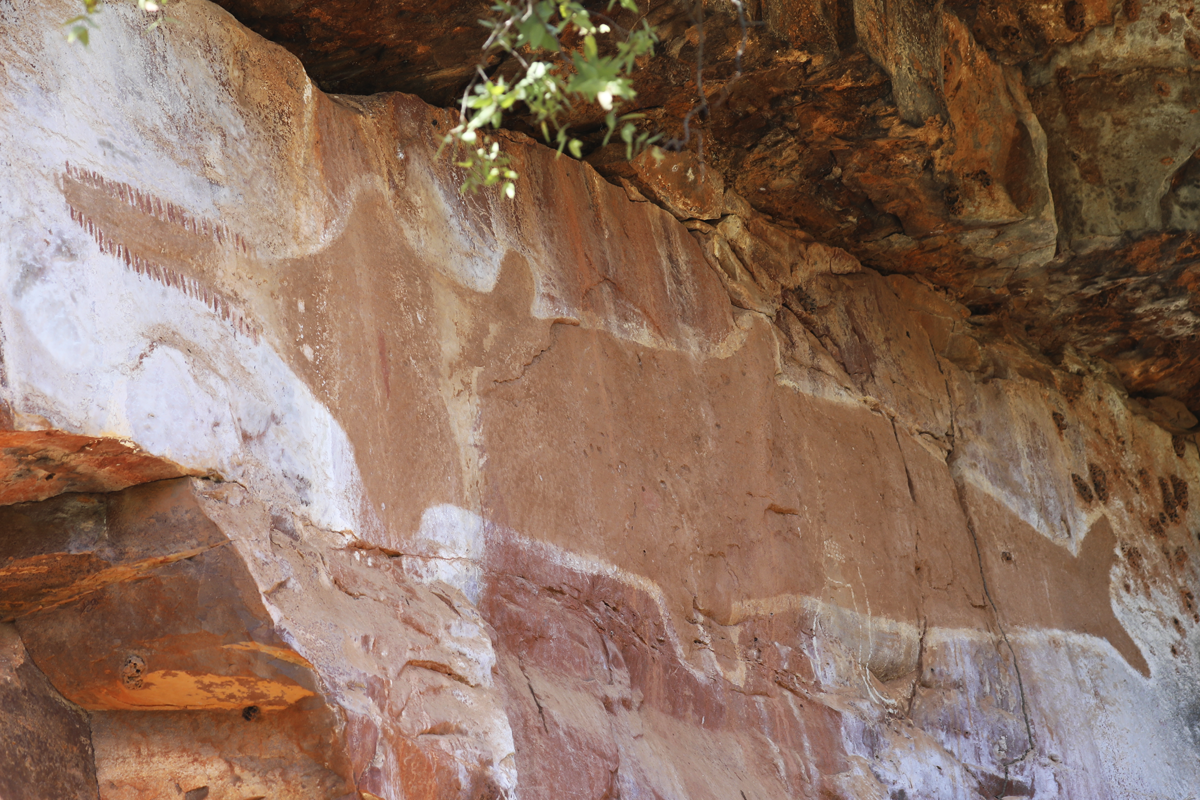A sawfish depicted in rock art on Revolver Creek at the edge of the Tanami Desert