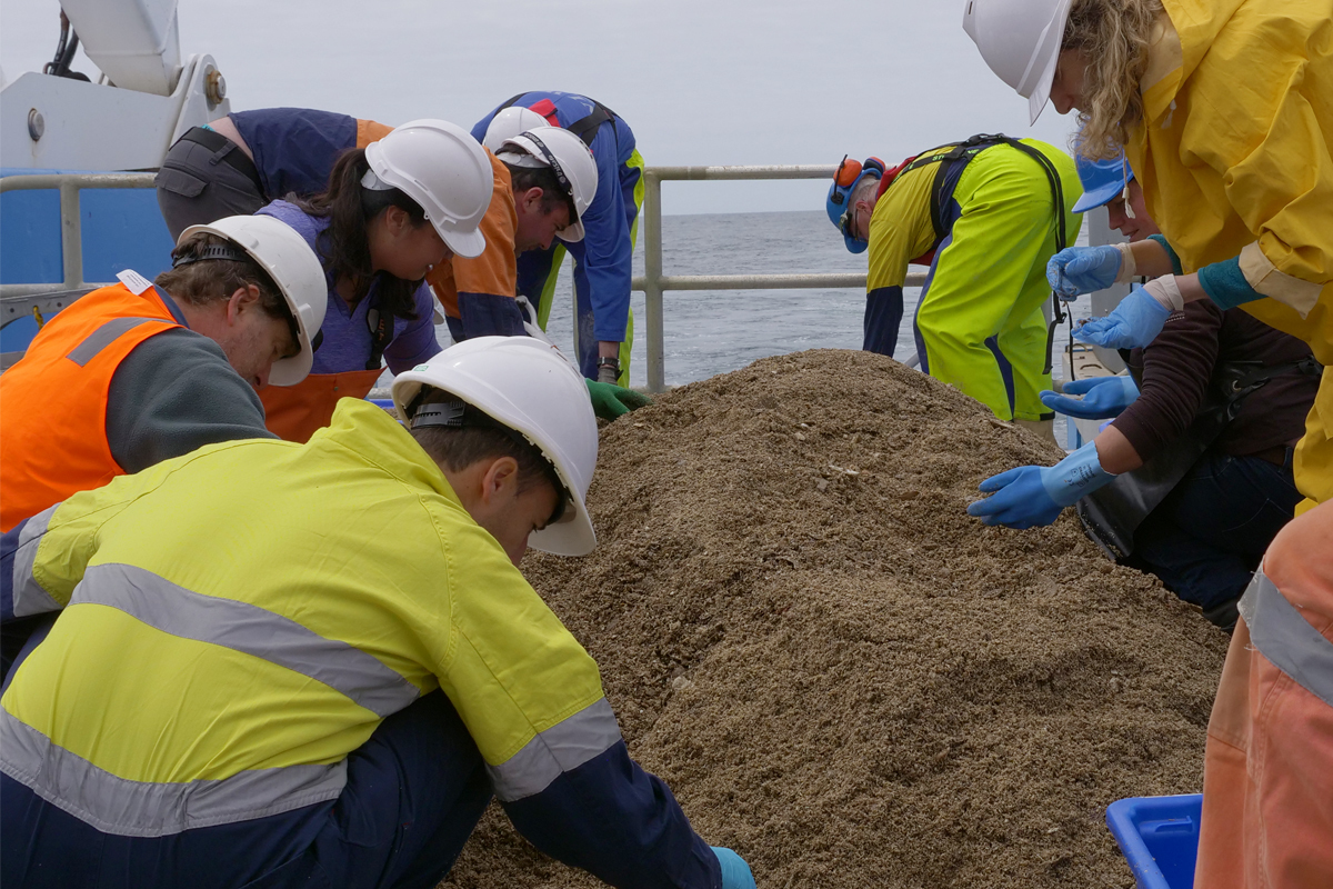 Scientists sort the catch from the beam trawl