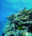 Photo:  Coral reef.  Copyright AIMS