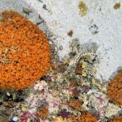 Rocky reef habitat in the Beagle CMR