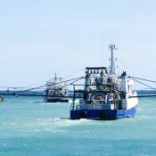 Trawlers in the Northern Prawn Fishery