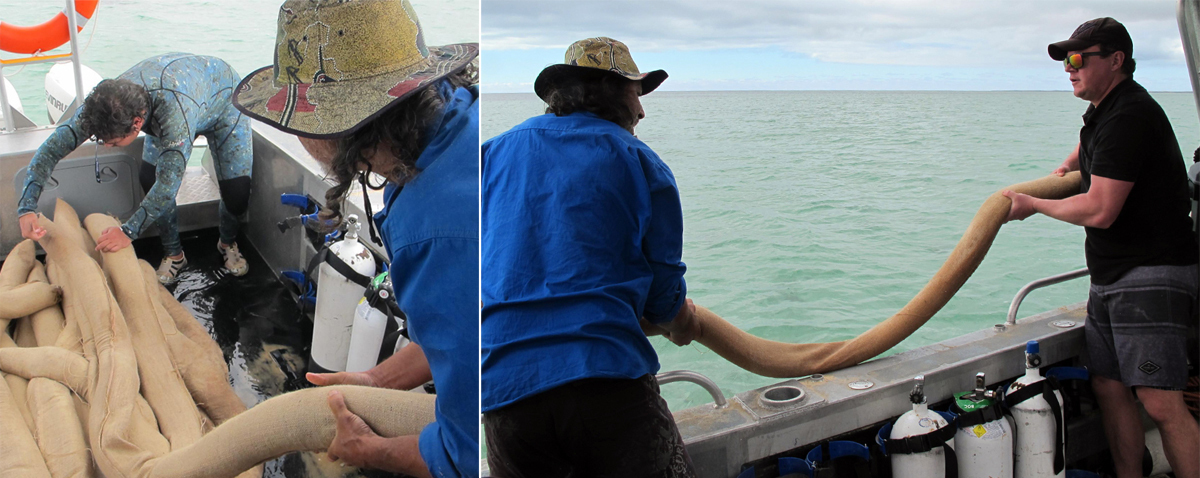 People preparing to drop snaggers in the water for seagrass restoration at Shark Bay