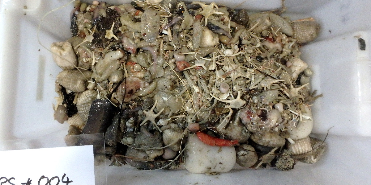 A tray of unsorted deep-sea catch